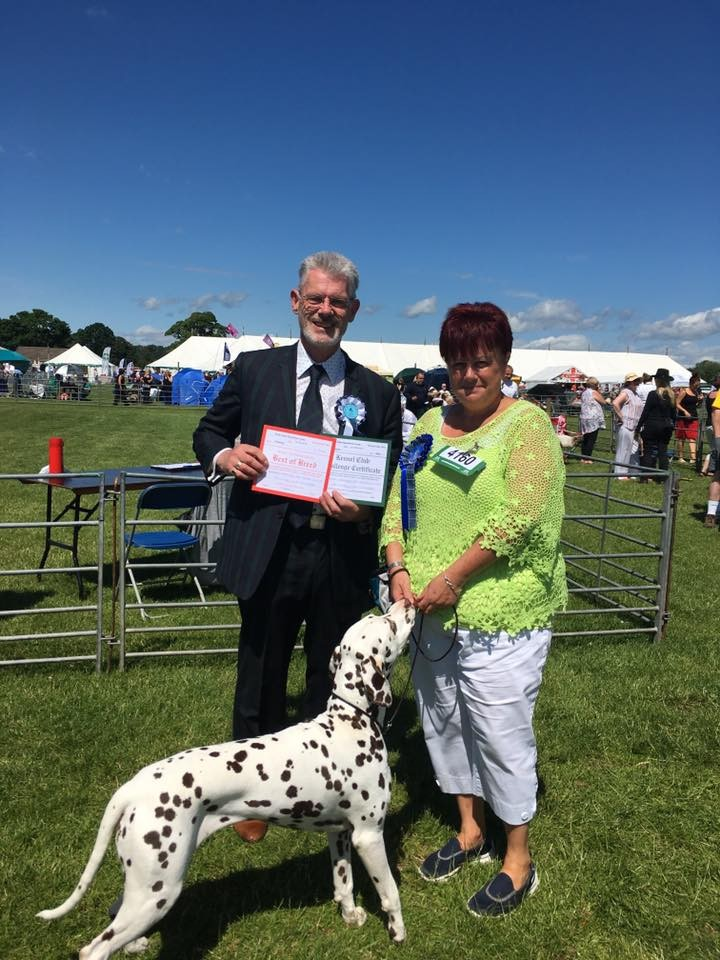 BEST OF BREED, Dalticino Interlagos From Dallydyl, David & Saunders