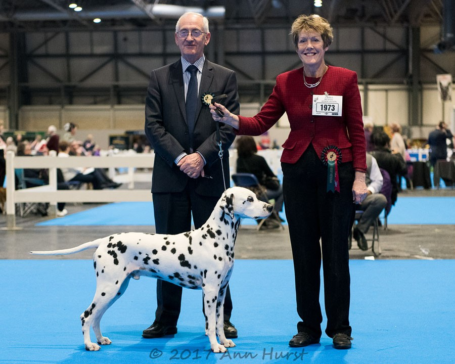 Best of Breed, Offordale Chevalier, Alexander