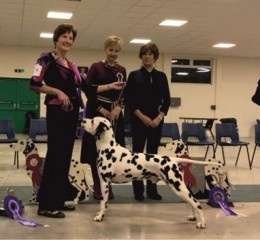 Best In Show & Best Black, Buffrey Incognito By Dalleaf, Neath-Duggan & Baker